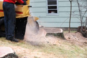 stump grinding - DFW Tree Services