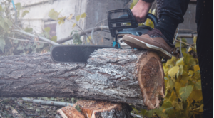 Tree Removal - DFW Tree Services
