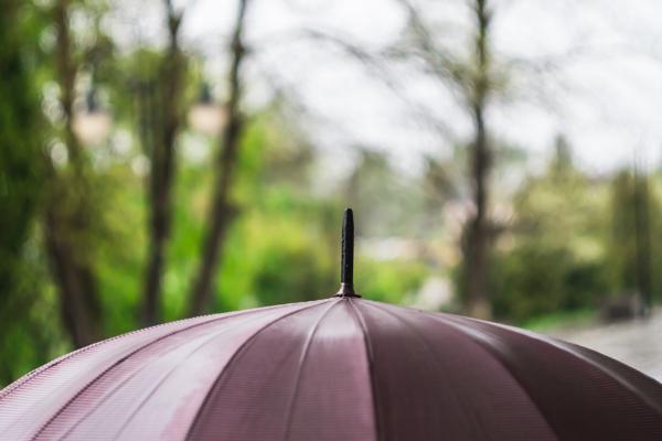 Umbrella in a Storm